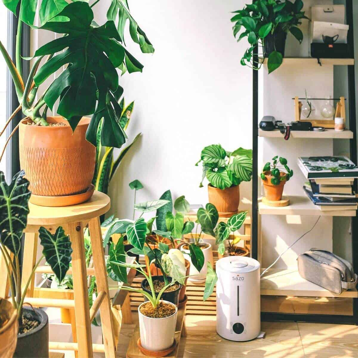 Several houseplants on the ground next to a shelf.